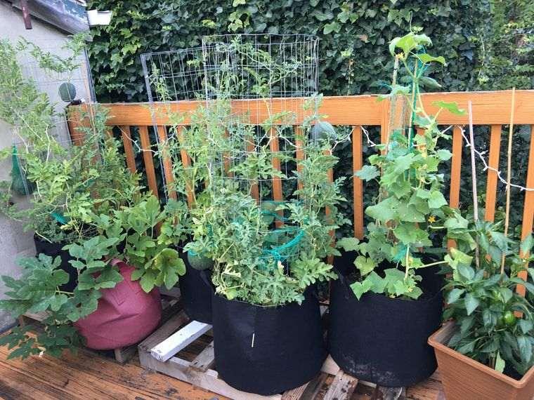 huerto ecológico en balcon