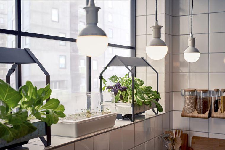 huerto ecológico en cocina