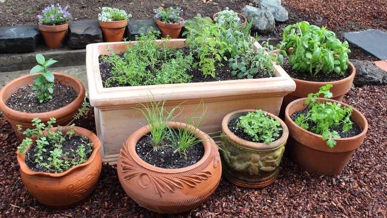 huerto ecológico hierbas culinarias