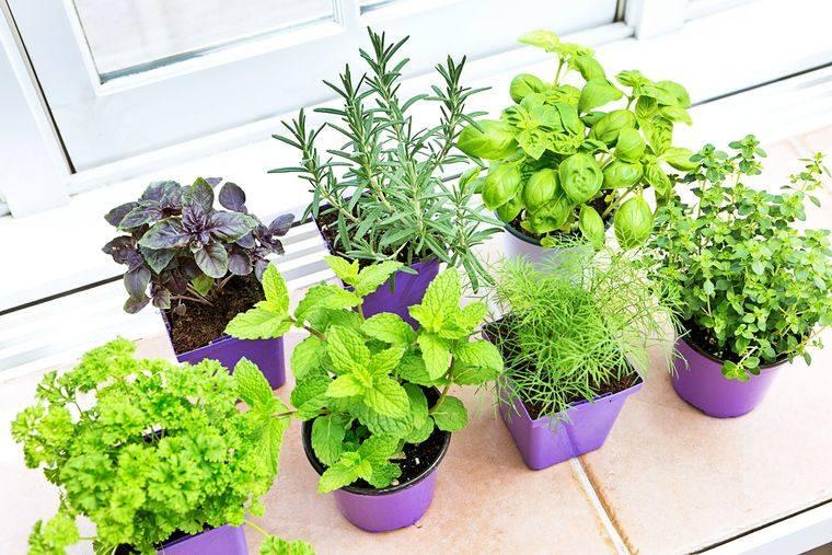 huerto ecológico interior vegetales