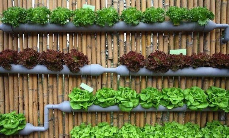 huerto ecológico pared
