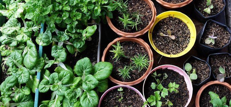 huerto ecológico pequeño