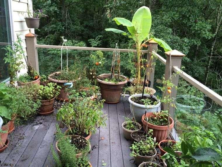 huerto ecológico terraza