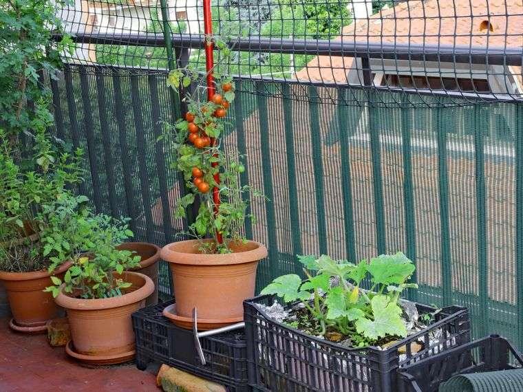 huerto ecológico vegetales