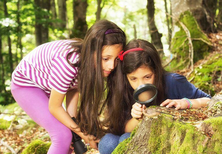 actividades de aventura descubriendo insectos