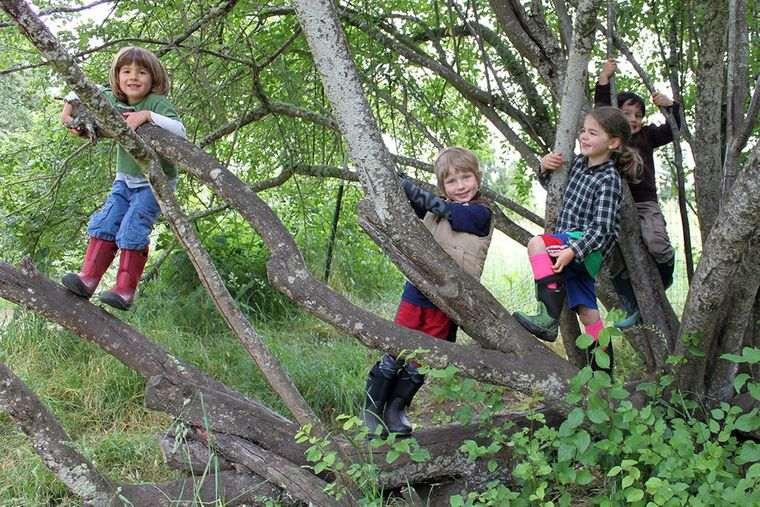 actividades de aventura trepar arbol