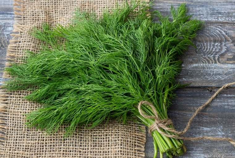alimentos verdes-beneficios-eneldo