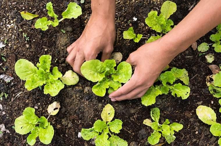 el huerto-casa-enero-empezar-vegetales