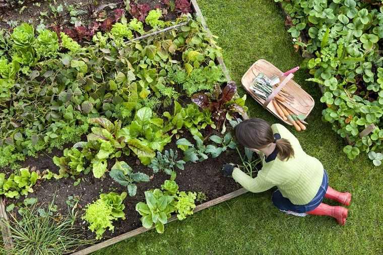 el huerto-casa-plantar-opciones