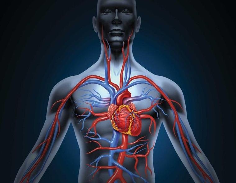 metabolismo rápido mejora circulacion sanguinea