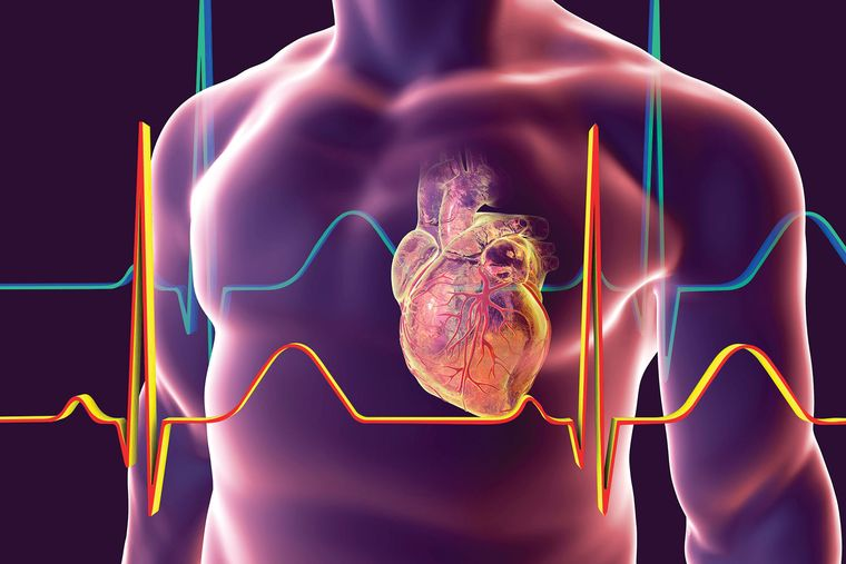 taurina beneficio corazon