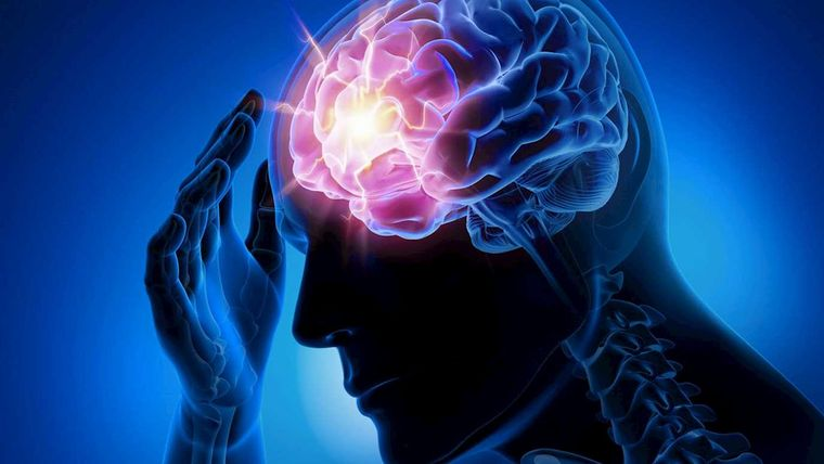 taurina protege al cerebro