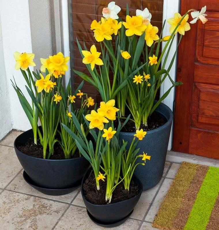 ideas para decorar entrada primavera