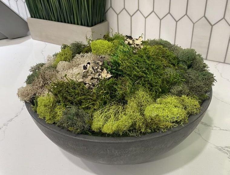 musgo para decoracion natural