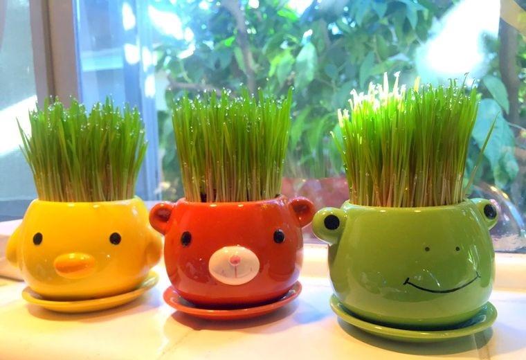 pasto de trigo decoracion colorida