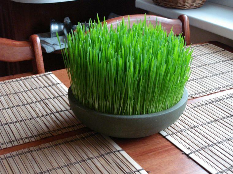 pasto de trigo decoracion primavera
