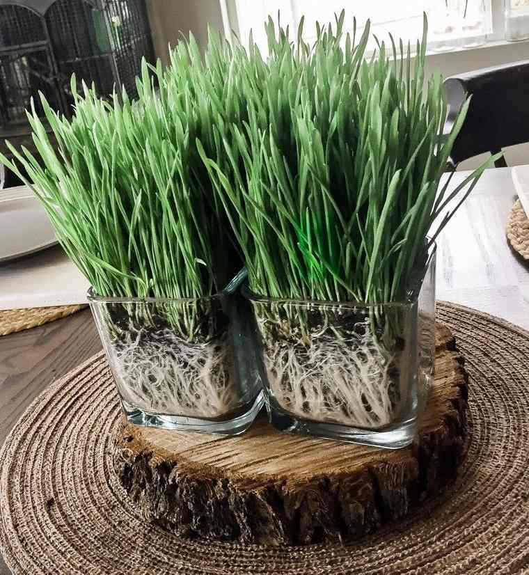 pasto de trigo decorar mesa