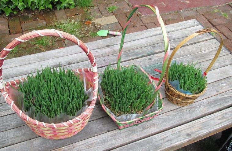 pasto de trigo en cesta para decorar