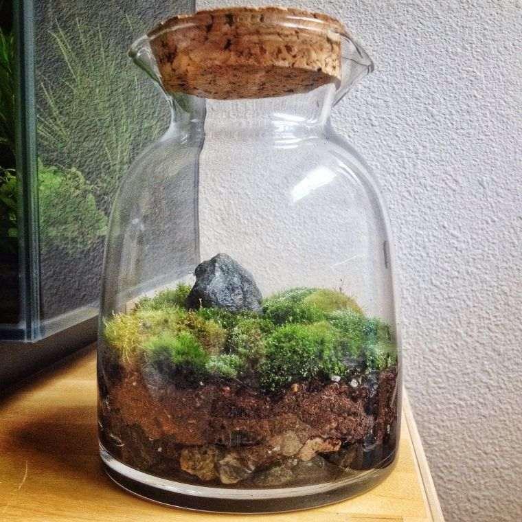 terrarios de cristal cerrado con musgo