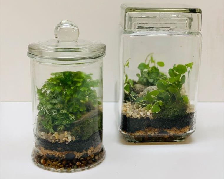 terrarios de cristal con mini plantas