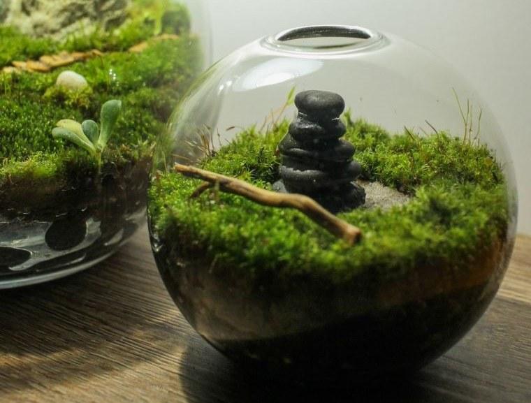 terrarios de cristal con musgo