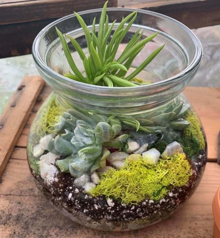 terrarios de cristal con suculentas