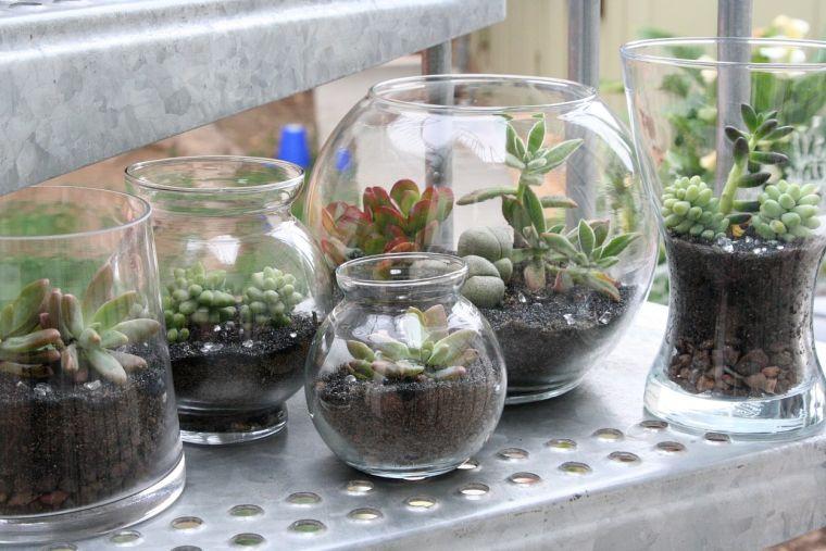terrarios de cristal decoracion natural