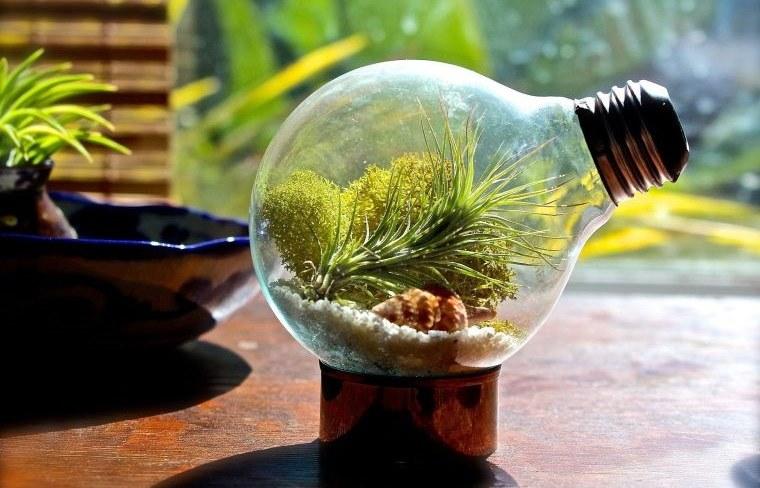 terrarios de cristal en miniatura