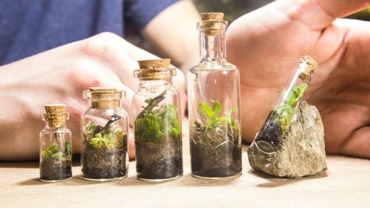 terrarios de cristal en miniaturas
