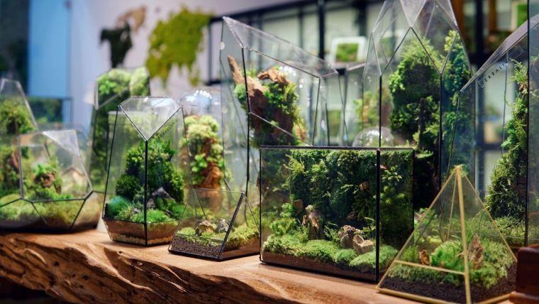 terrarios de cristal hermosas presentaciones