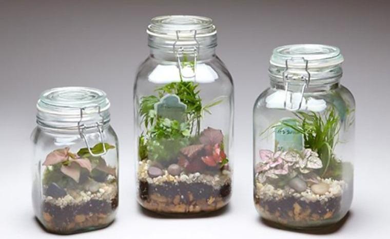 terrarios de cristal ideas bricolaje