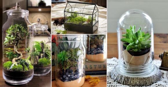 terrarios de cristal para hogar