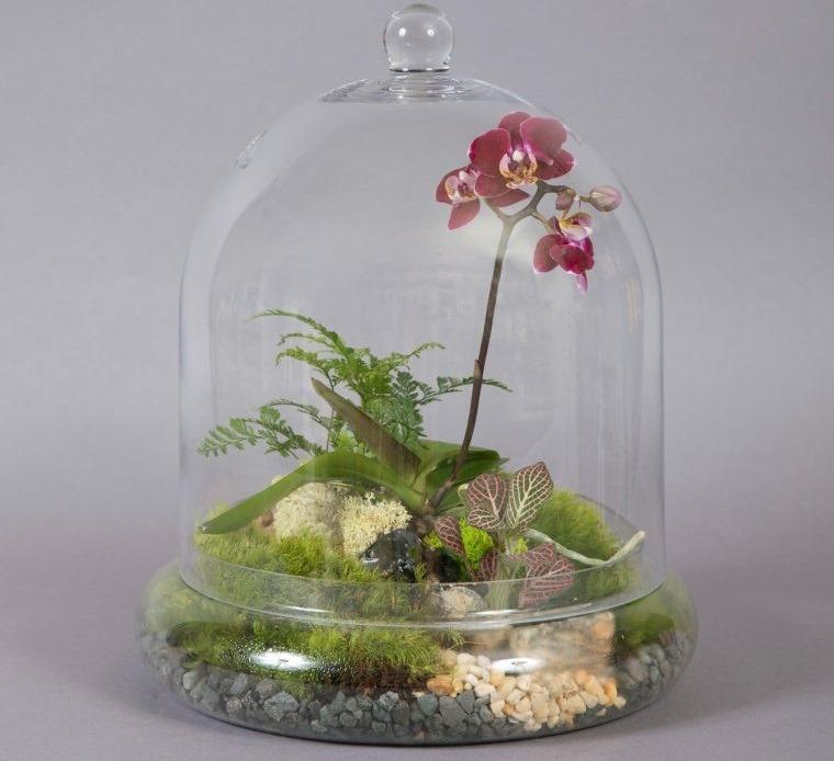 terrarios de cristal para regalo