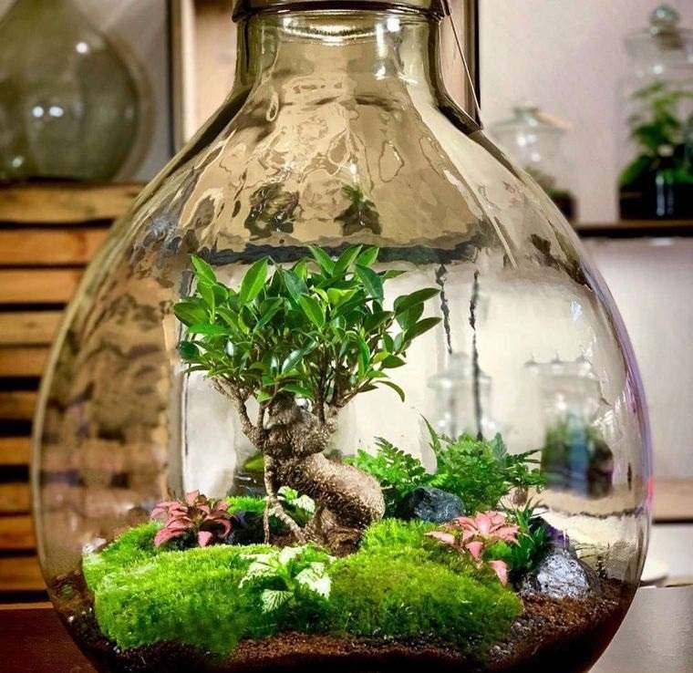 terrarios de cristal pequeño ecosistema