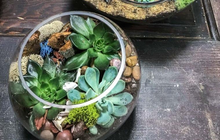 terrarios de cristal pequeños jardines