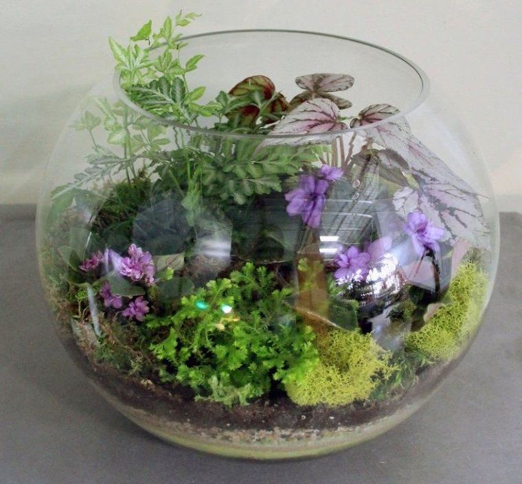 terrarios de cristal plantas adecuadas