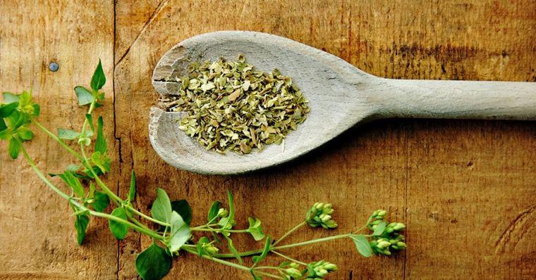 tipos de hierbas antivirales oregano