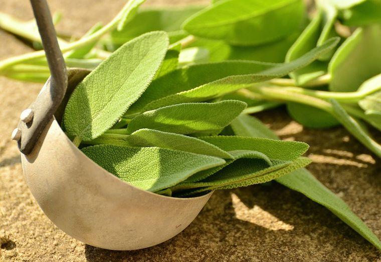tipos de hierbas antivirales sabios