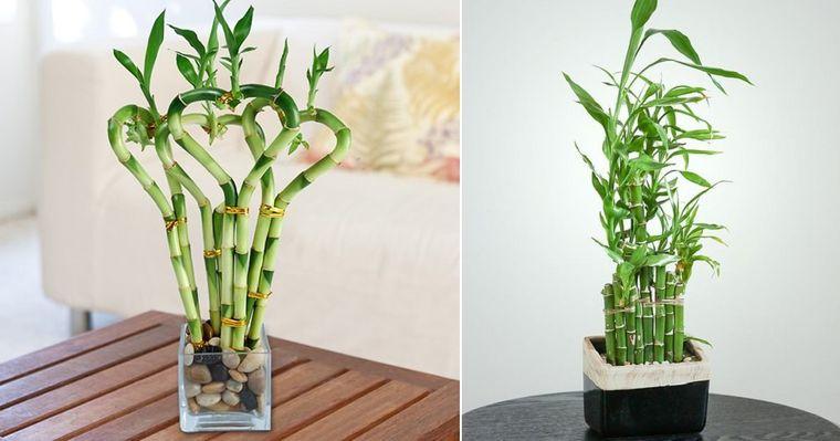 decoración con bambú hogar