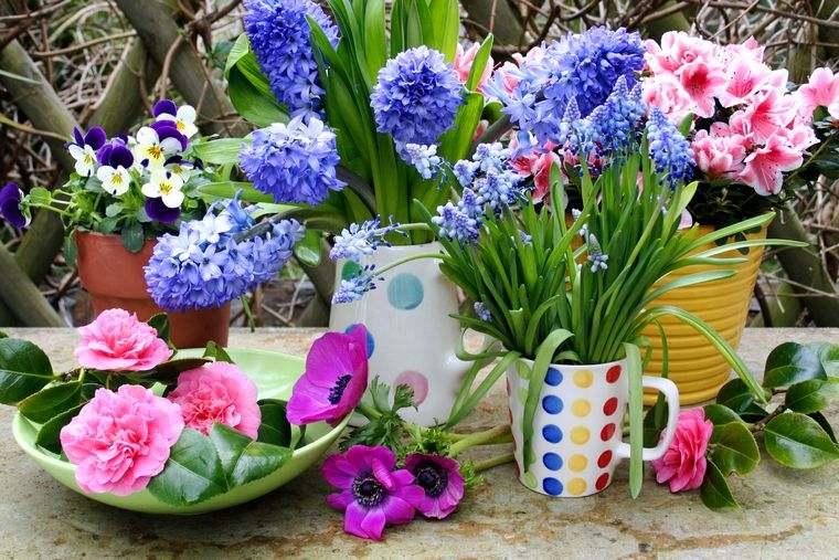flores de jacinto agradable aroma