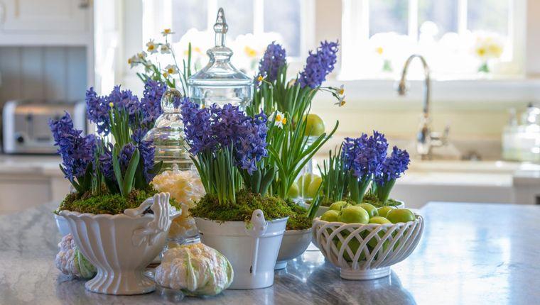 flores de jacinto color azul