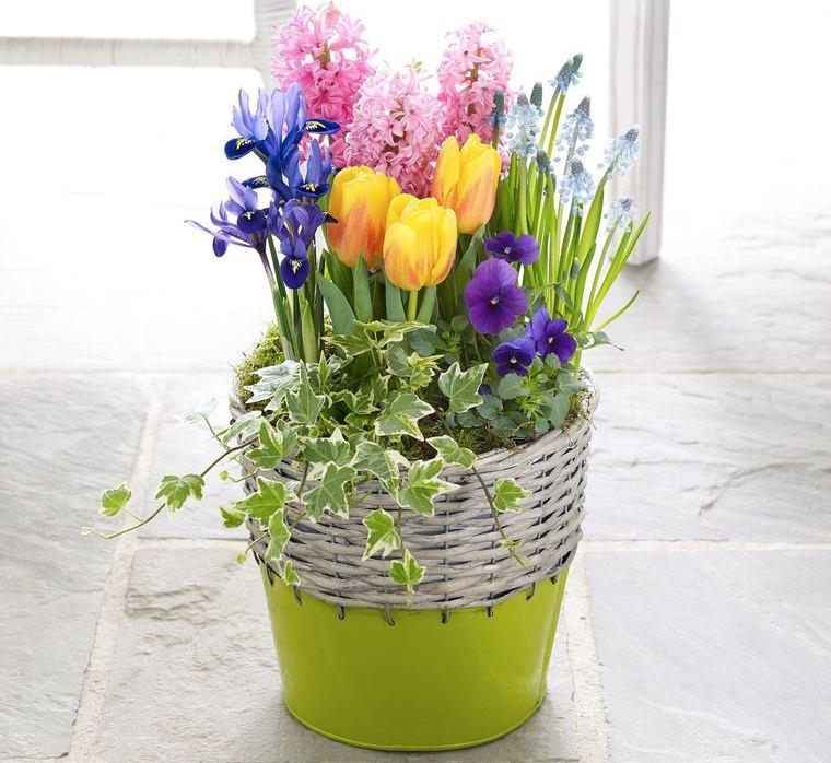 flores de jacinto con diferentes flores