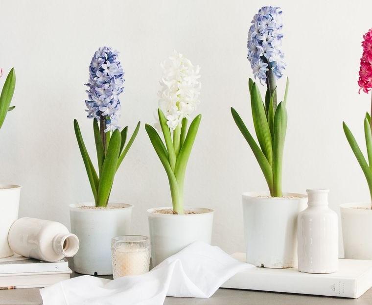 flores de jacinto decorar repisa primavera