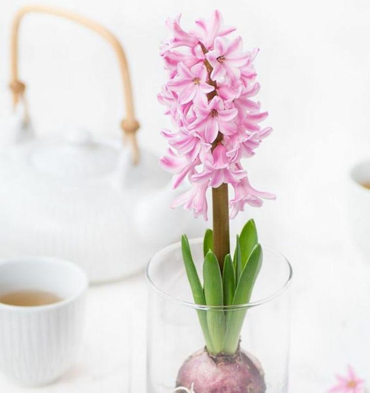 flores de jacinto en rosa para decorar