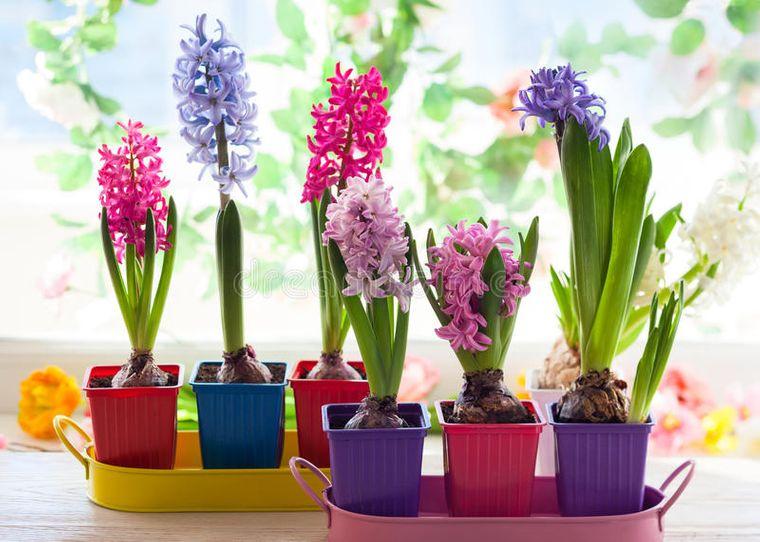 flores de jacinto fresca decoracion