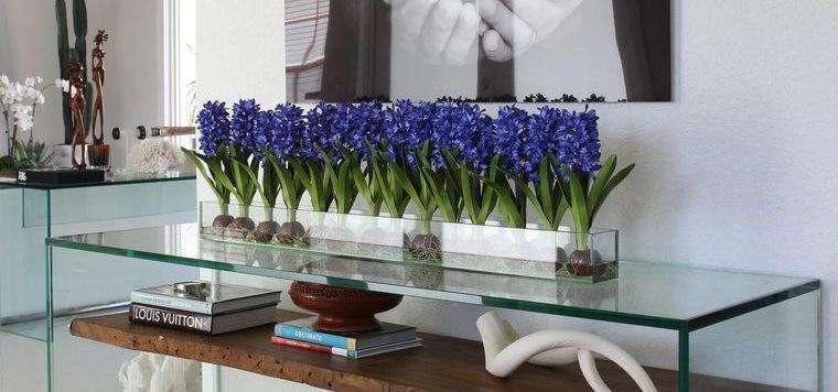 flores de jacinto hermosa decoracion