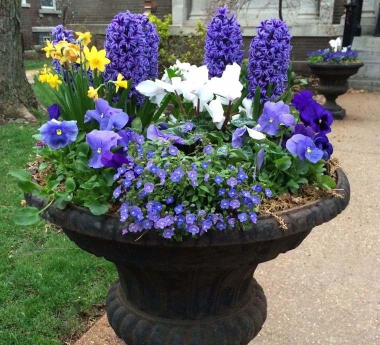 flores de jacinto para decorar el exterior
