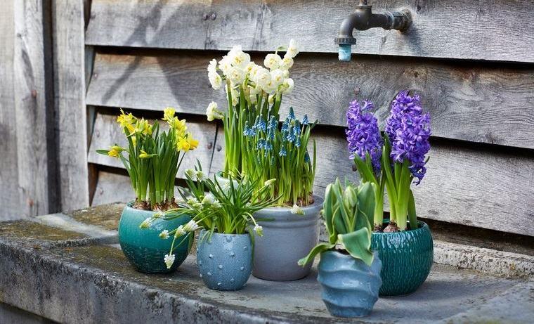 flores de jacinto para decorar exterior
