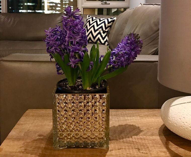 flores de jacinto para decorar interior hogar