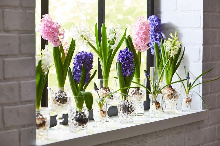 flores de jacinto para decorar ventana